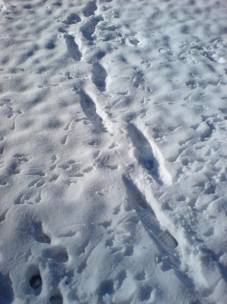 snowtraces.jpg